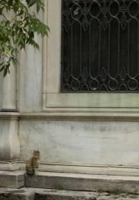 Stylishe Katze in Istanbul, Fatih