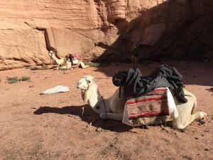 Aufbruch: unsere beiden Kamele