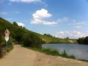 Neckarschleife bei Kirchheim, Weinberge in Steillagen