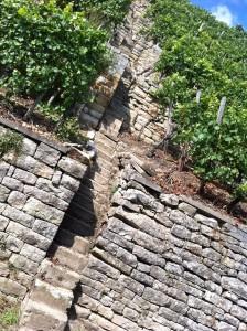 Weinbergstaffel, zwischen gepflegten Weinbergen, Neckarschleife Kirchheim