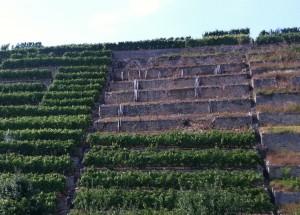 Eingestürzte Schrannenmauer - Trockenmauern in Steillagenweinberg