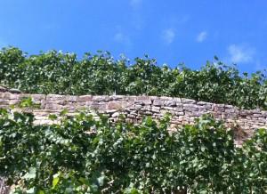 Trockenmauer mit Bauch, Steillage bei Kirchheim