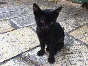 Katze in Jerusalem, freundlicher, als sie aussieht