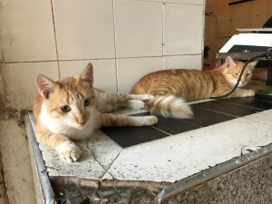 Katzen beim Metzger