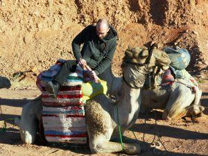 Kamel, erste Aufsteigeversuche
