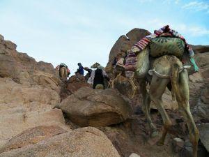 Typischer Bergpfad