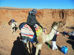 Kamel, erfolgreicher Aufsteigeversuch